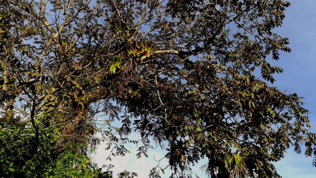 Cloud forest Importances