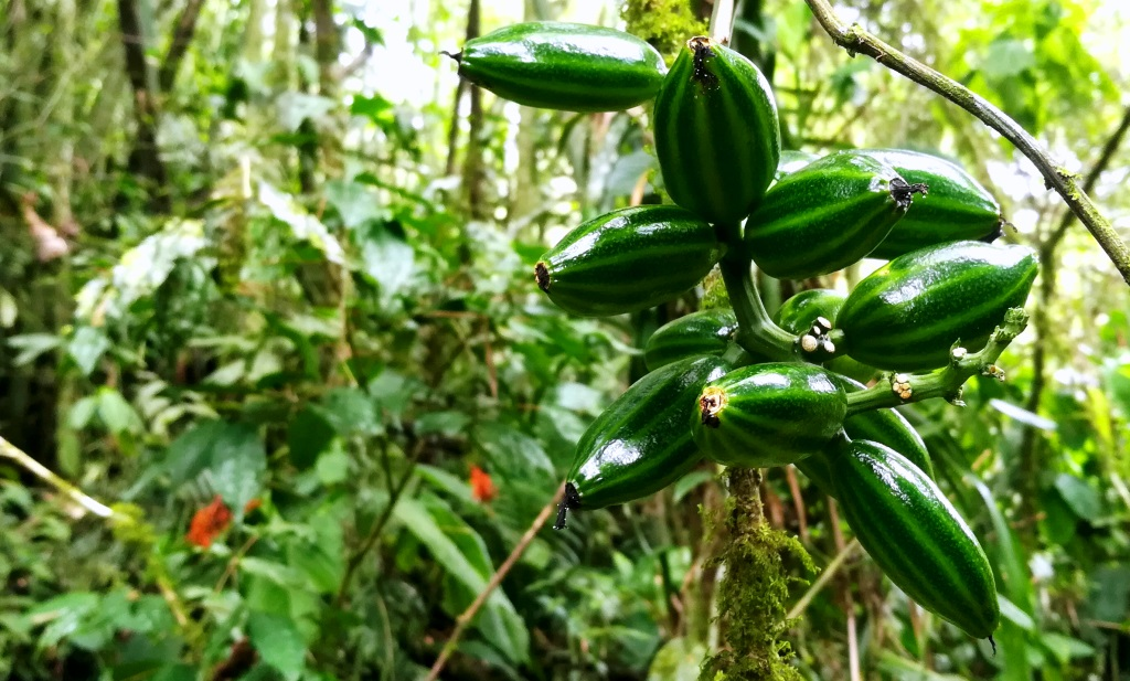 Welcome to the Cloudforest in Ecuador
