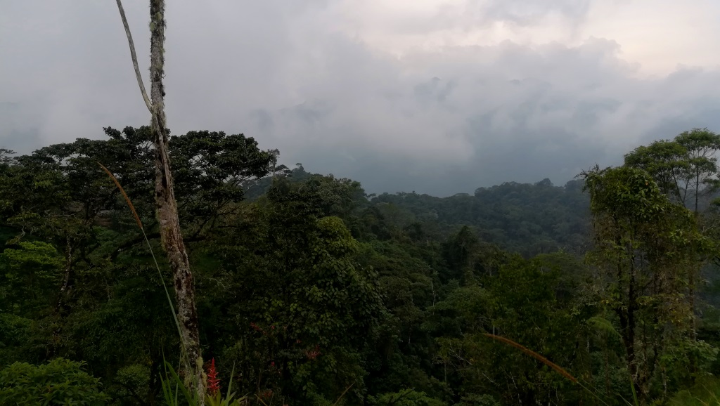 Nature in the Cloudforest