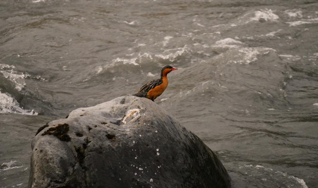 Birdwatching Baeza eBird Field Checklist in Ecuador