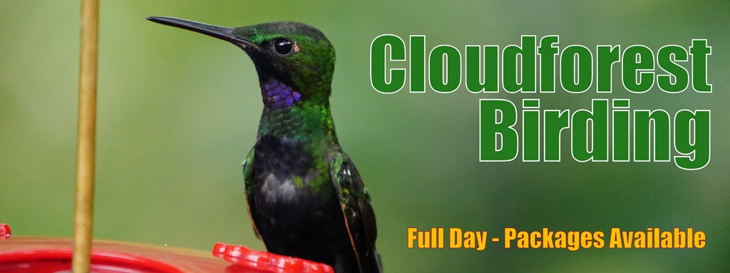 Cloudforest-Things-to-Do-birdwatching